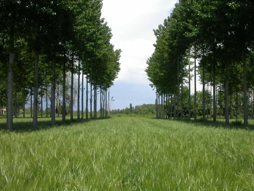 Восстановление нарушенных земель - агролесоводство