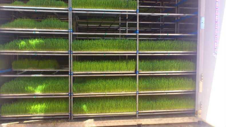 Установка выращивания зелени