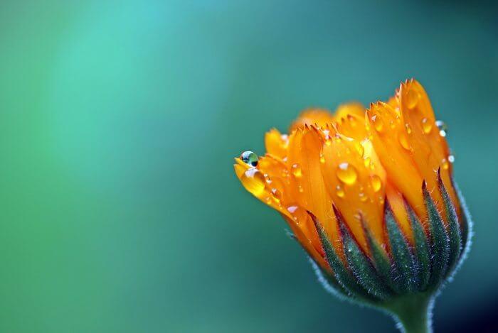 Регулятор роста растений Элиситоры 5