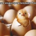 Инкубатор для куриных яиц автоматический