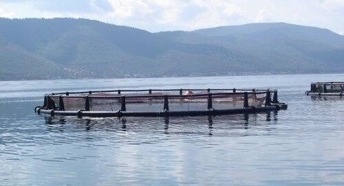 Рыбные фермы и технология выращивания рыбы