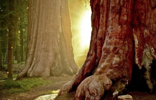 Биометрический учет древесины