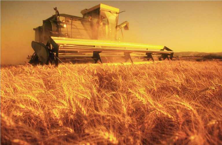 Урожайность зерновых