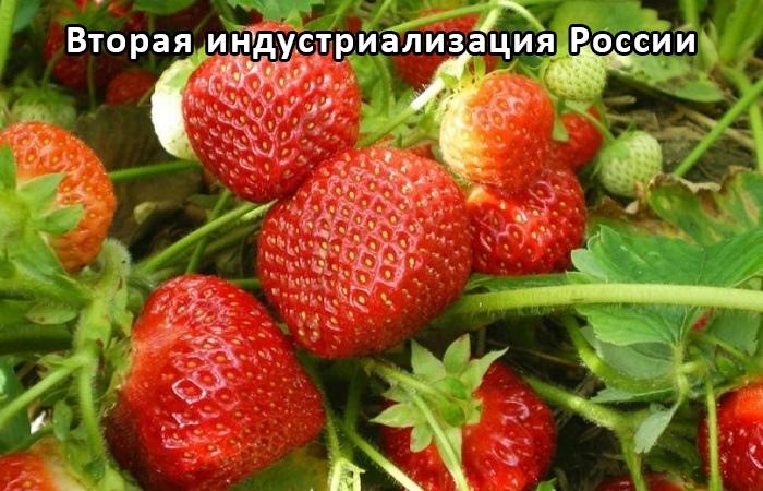 Сельскохозяйственное тепличное производство