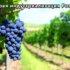 Органические удобрения и технология производства