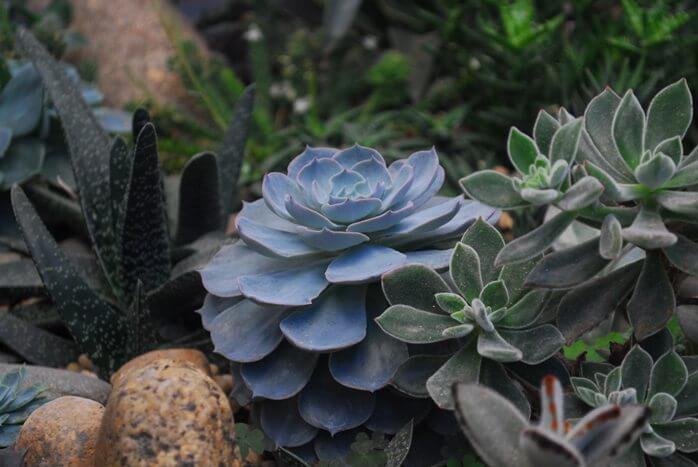 Микориза_для растений1