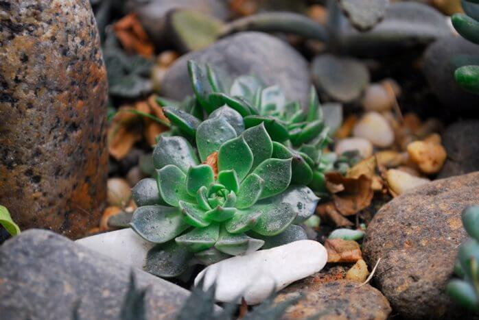 Микориза_растений4