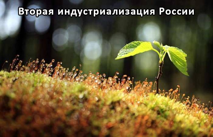 Микробиологическое средство защиты растений от насекомых