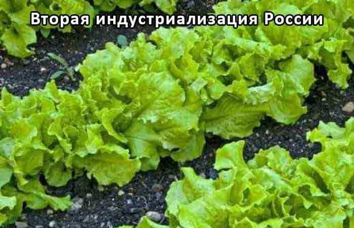Светодиодные фитосветильники для растений