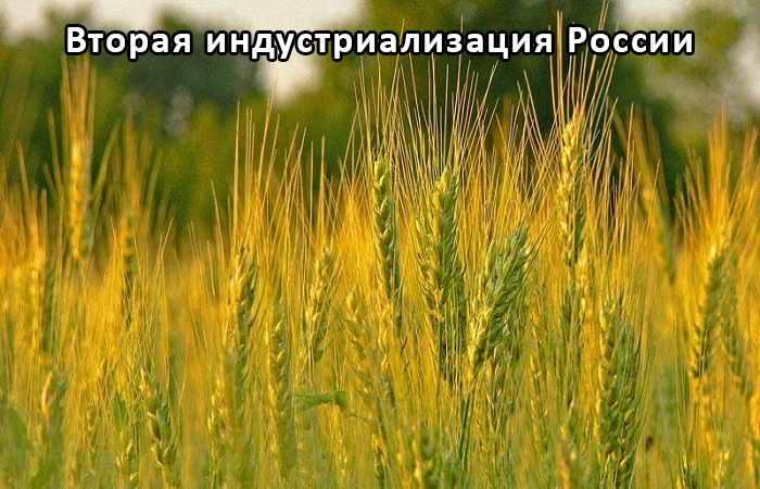 Высокоурожайные сорта пшеницы