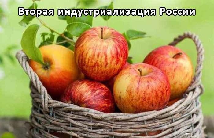 Измельчитель овощей и фруктов