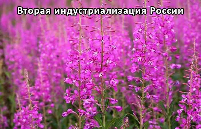 Средство защиты от вредителей и болезней растений
