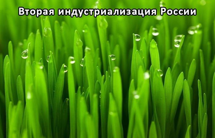 Гидропонный зеленый корм
