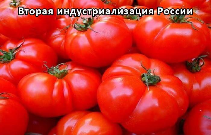 Система проверки качества сельхозпродукции