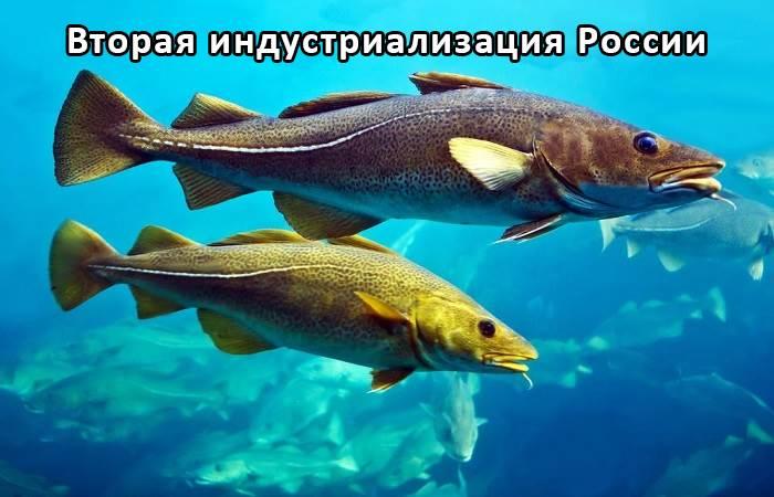 Рыболовные траулеры средних размеров