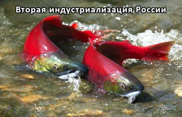 Большой рыболовный траулер