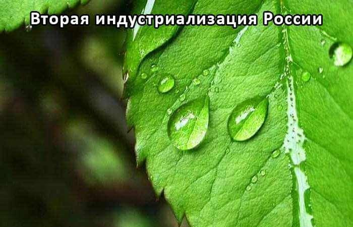 Криогель для роста и развития растений в неблагоприятных условиях