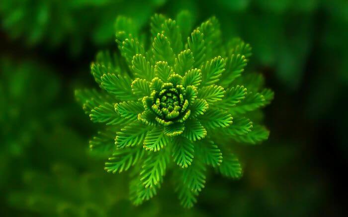 Регулятор роста растений Элиситоры 4