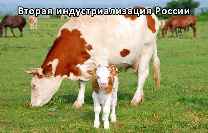 Кормовая добавка для животных
