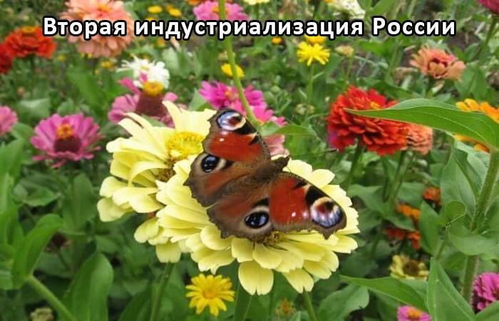 """Дождевые черви """"Старатели"""" для повышения плодородия почвы"""