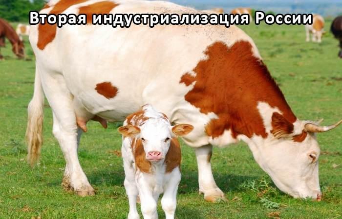 Автоматическая система машинного доения коров «Стимул»