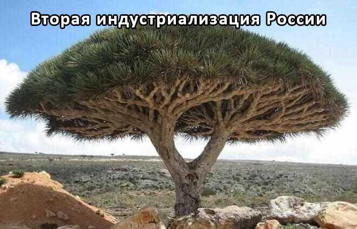 """Жидкое органическое удобрение """"КОУД"""""""