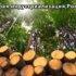 Харвестер – лесозаготовительный комбайн