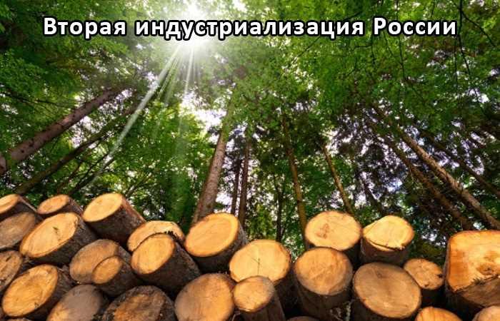 Харвестер - лесозаготовительный комбайн