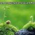 Регуляторы роста растений – элиситоры