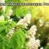 Применение нанопорошков в сельском и лесном хозяйстве