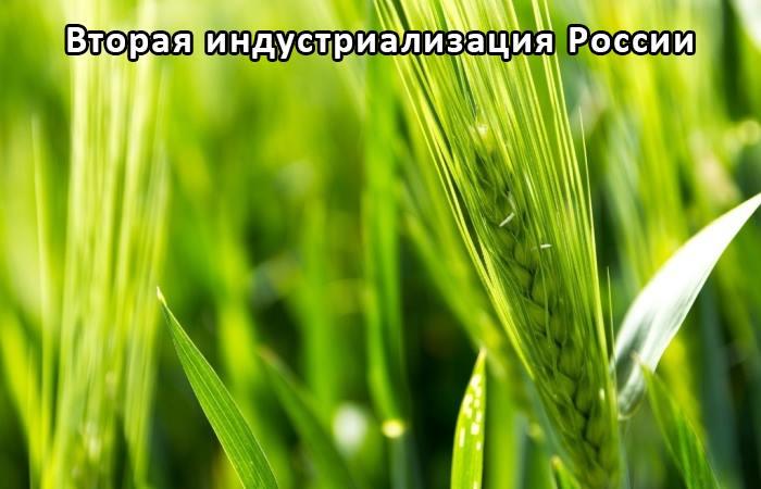 Зерносенаж