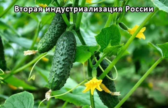 Установка для интенсивной подготовки семян