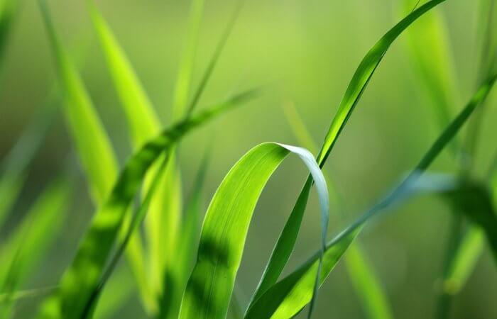 Обработка торфа с целью получения комплексных удобрений и восстановления плодородия почвы