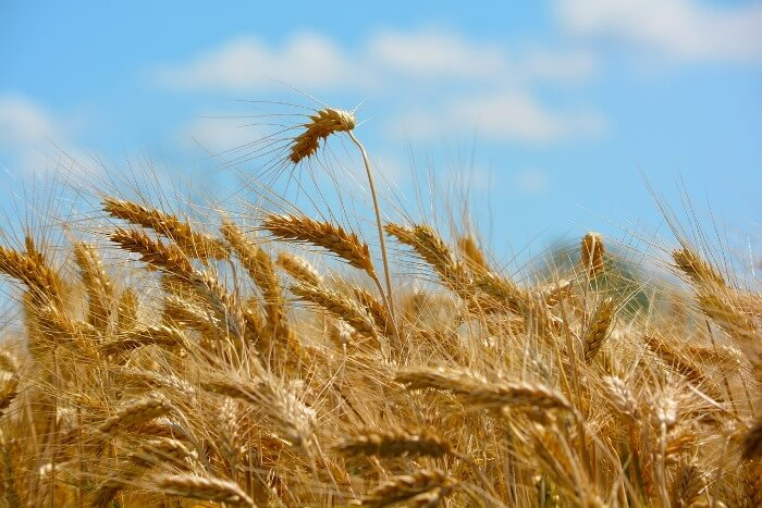 Антистрессовое земледелие 3