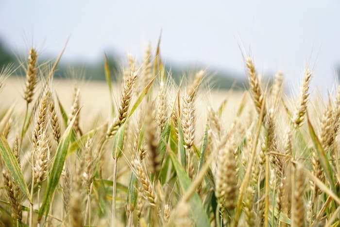 Искусственный мозг-агродроид для сельхозмашин