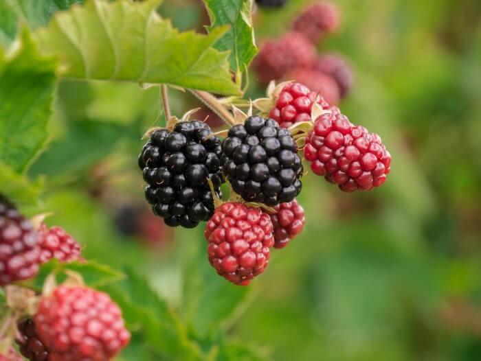 Сублимированные ягоды, фрукты, овощи и порошки
