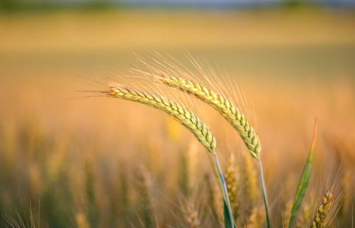 Вертикальные фермы – вертикальное сельское хозяйство