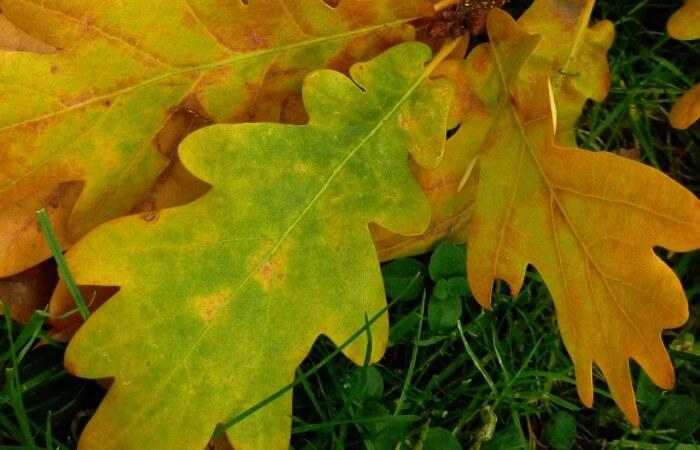 Бумага из опавшей листвы