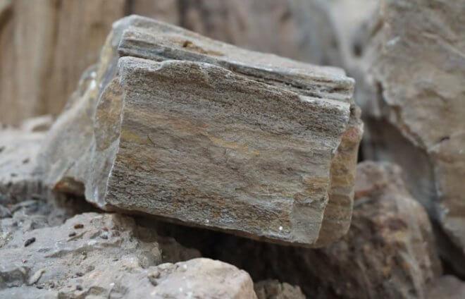 Окаменелое дерево или каменная древесина