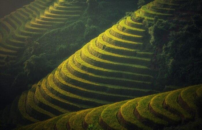 Урожайность риса в странах мира и России