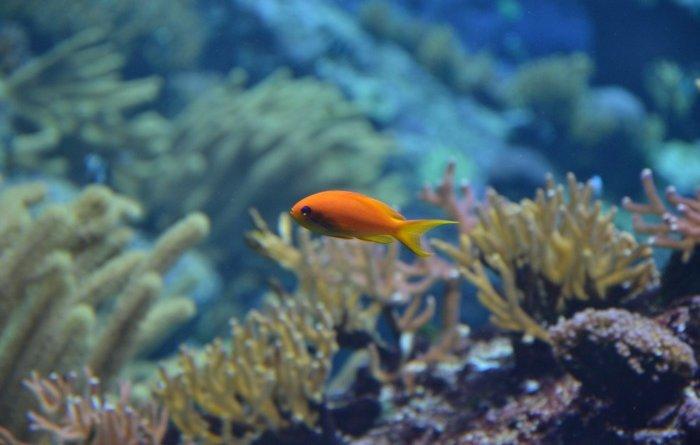 Содержание и распространенность химических элементов в морях и океанах