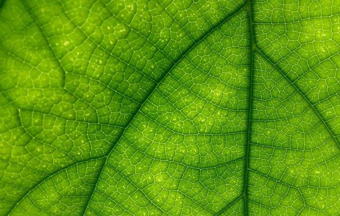Растение, которое может самостоятельно светиться в темноте