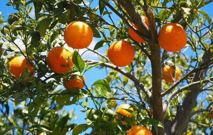 Биокомпозит, продлевающий срок годности фруктов на неделю