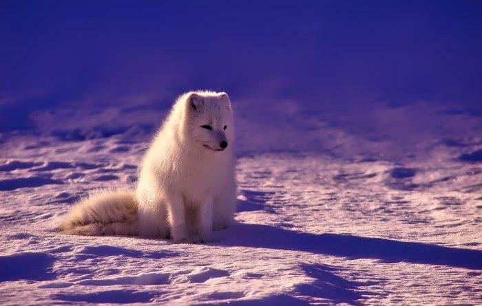 Бетон для Арктики