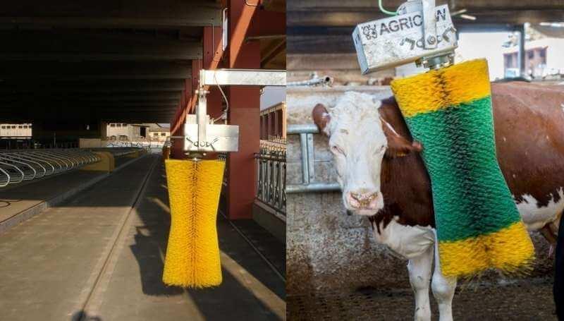 Чесалка для коров в коровнике